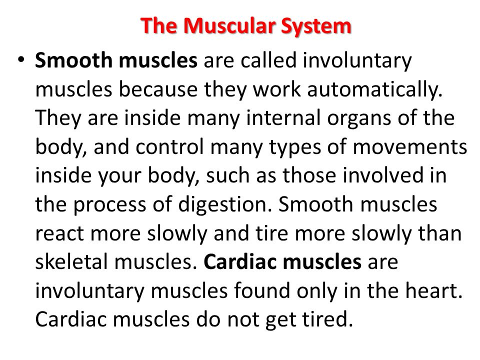 The Muscular System Smooth muscles are called involuntary muscles because they work automatically. They are inside many internal organs of the body, a