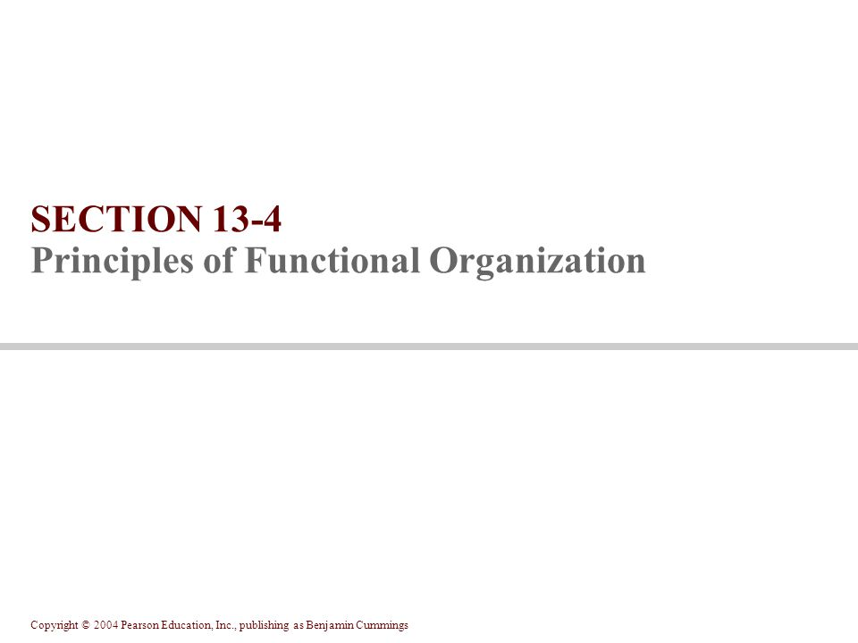 Copyright © 2004 Pearson Education, Inc., publishing as Benjamin Cummings SECTION 13-4 Principles of Functional Organization