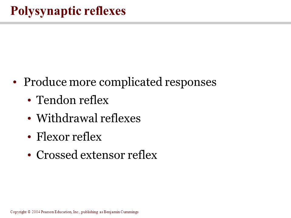Copyright © 2004 Pearson Education, Inc., publishing as Benjamin Cummings Produce more complicated responses Tendon reflex Withdrawal reflexes Flexor reflex Crossed extensor reflex Polysynaptic reflexes