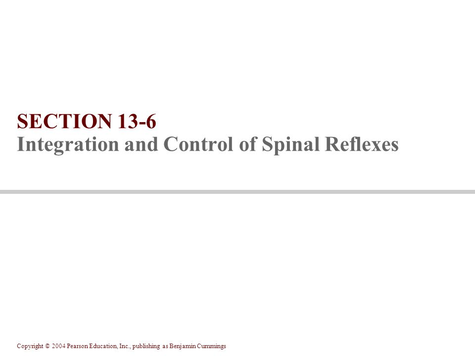 Copyright © 2004 Pearson Education, Inc., publishing as Benjamin Cummings SECTION 13-6 Integration and Control of Spinal Reflexes