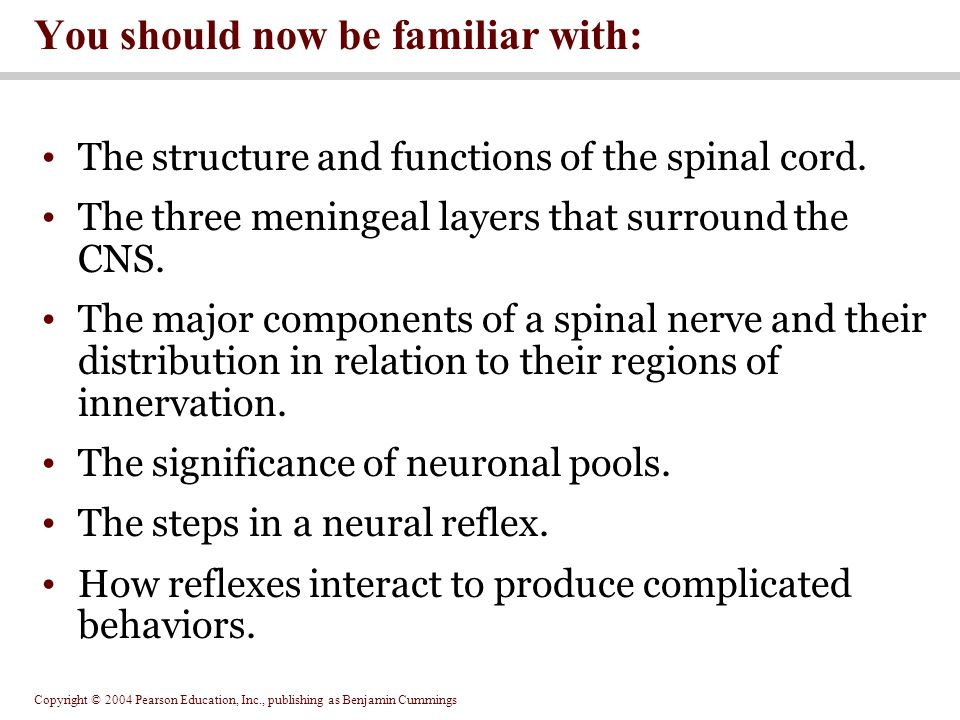 Copyright © 2004 Pearson Education, Inc., publishing as Benjamin Cummings You should now be familiar with: The structure and functions of the spinal cord.