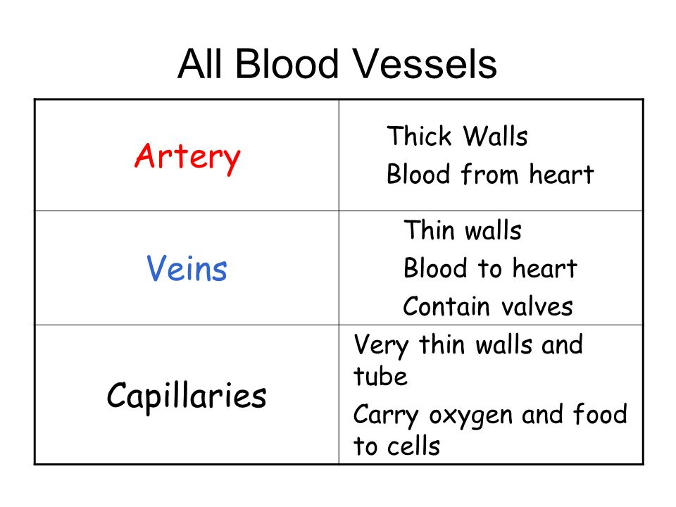 The heart has four major blood vessels VENA CAVA PULMONARY VEIN AORTA PULMONARY Artery VENA CAVA From body To body From lungs To lungs