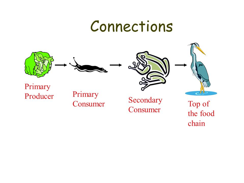 Levels of organization - Terms Organism – living thing Population – one species live in one place at one time Community – All populations (diff. speci