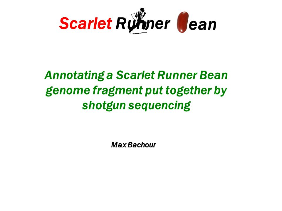 Annotating a Scarlet Runner Bean genome fragment put together by shotgun sequencing Scarlet Runner ean Max Bachour