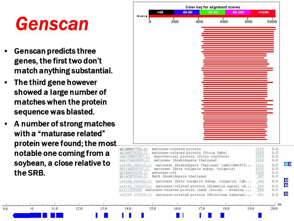 GeneMark Genemark predicted 20 genes.