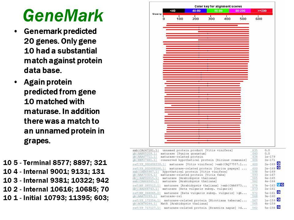 Fgenesh Predicted three genes.
