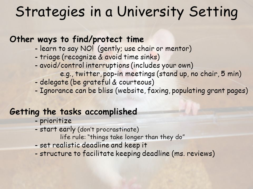 Strategies in a University Setting Make use of mentors, colleagues, & friends Paws to celebrate accomplishments and successes Chunk large tasks - manageable units (sub-deadlines) - accomplish sequentially - make progress even in trough (forms/cover letter) - least desirable part first (I don't buy it)