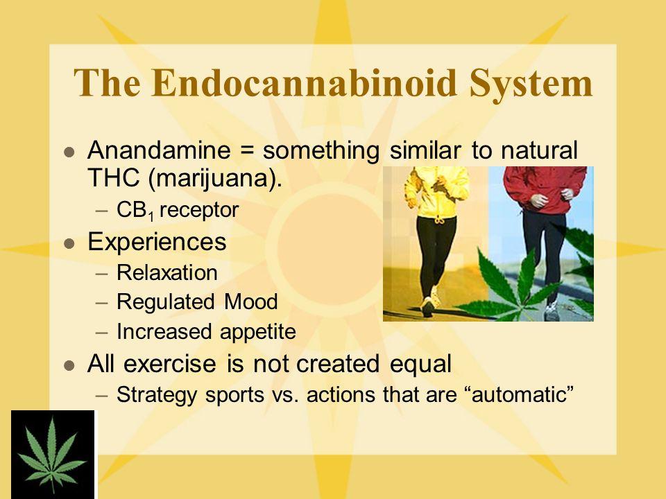 The Endocannabinoid System Anandamine = something similar to natural THC (marijuana).