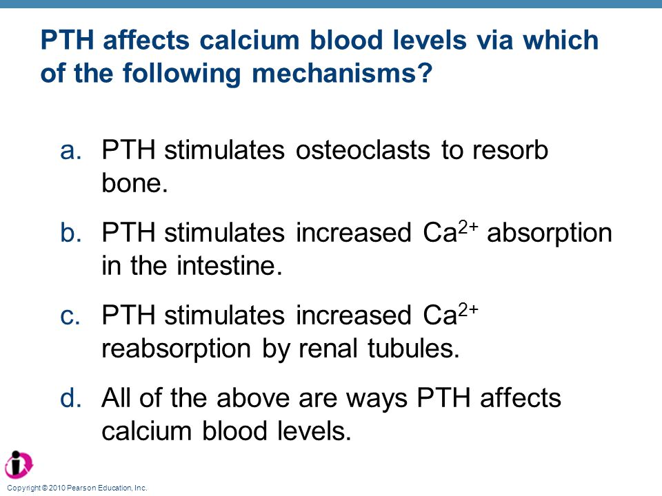 Copyright © 2010 Pearson Education, Inc. PTH affects calcium blood levels via which of the following mechanisms? a.PTH stimulates osteoclasts to resor