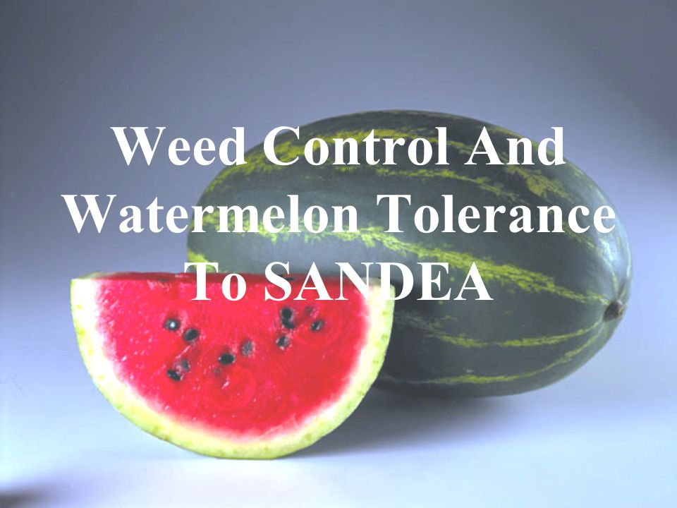 Weed Control And Watermelon Tolerance To SANDEA
