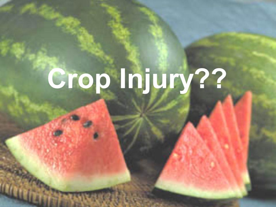 Crop Injury??