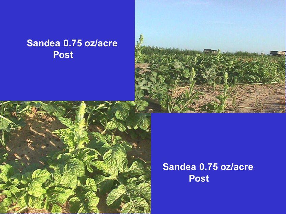 Sandea 0.75 oz/acre Post Sandea 0.75 oz/acre Post