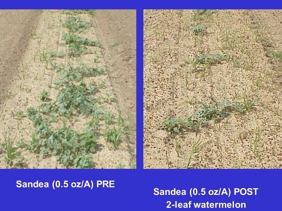 Sandea (0.5 oz/A) PRE Sandea (0.5 oz/A) POST 2-leaf watermelon