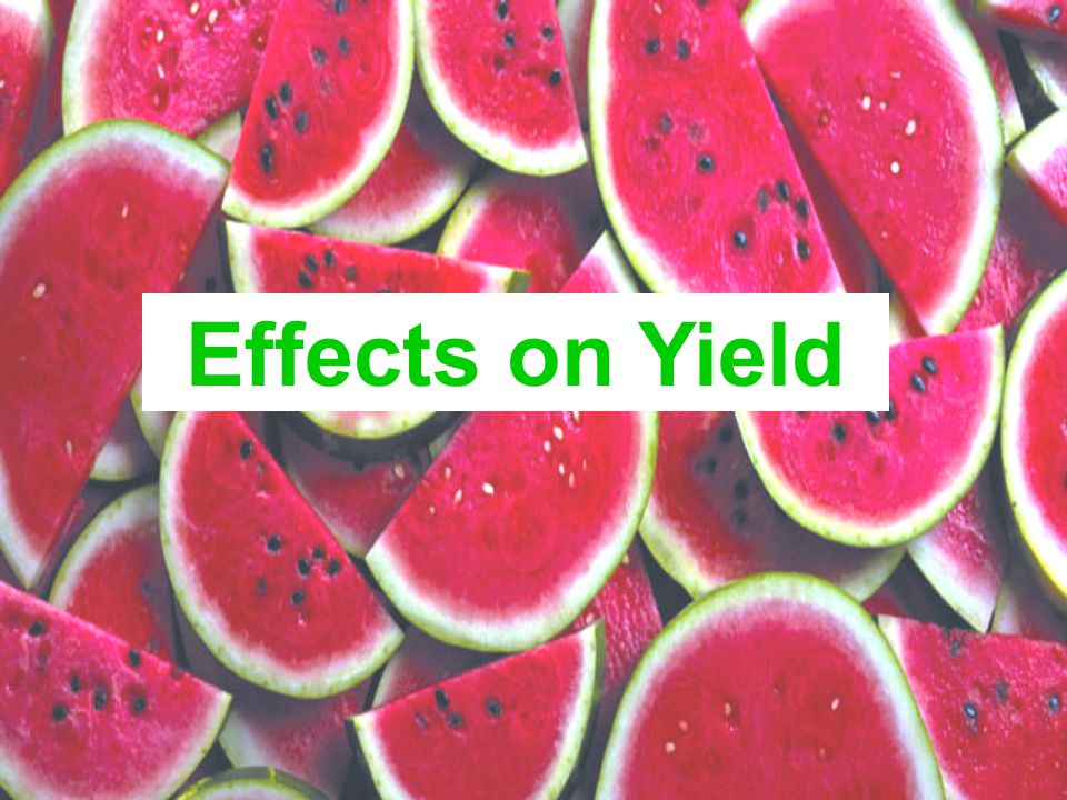 Effects on Yield
