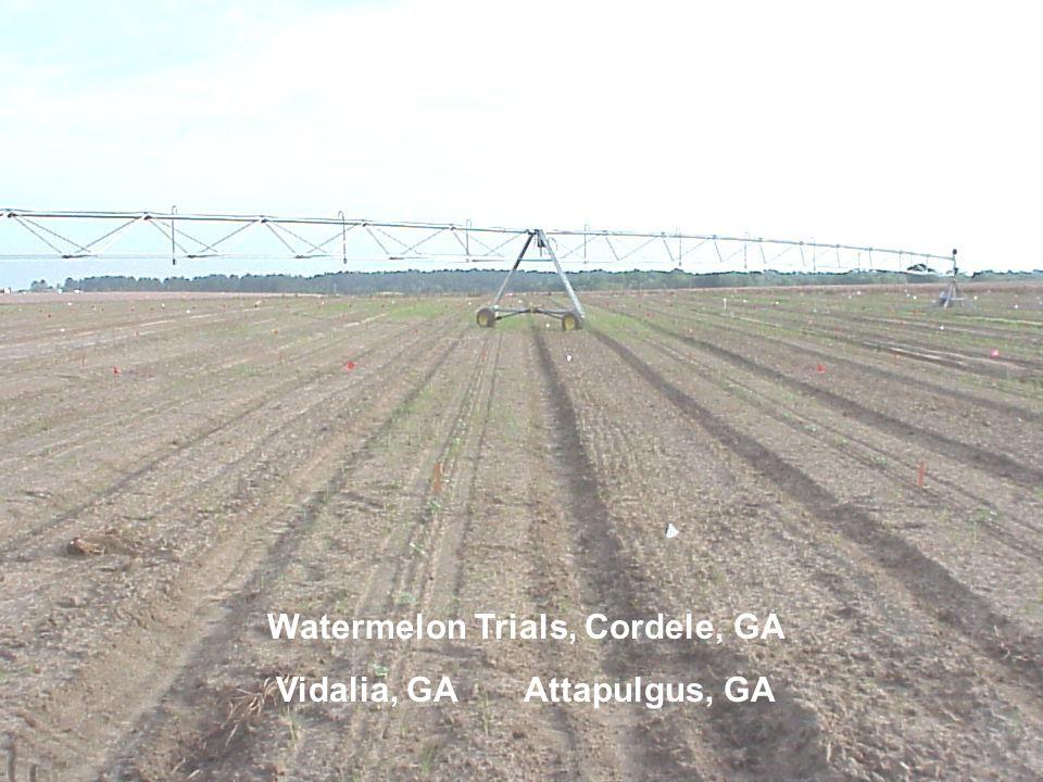 Watermelon Trials, Cordele, GA Vidalia, GA Attapulgus, GA