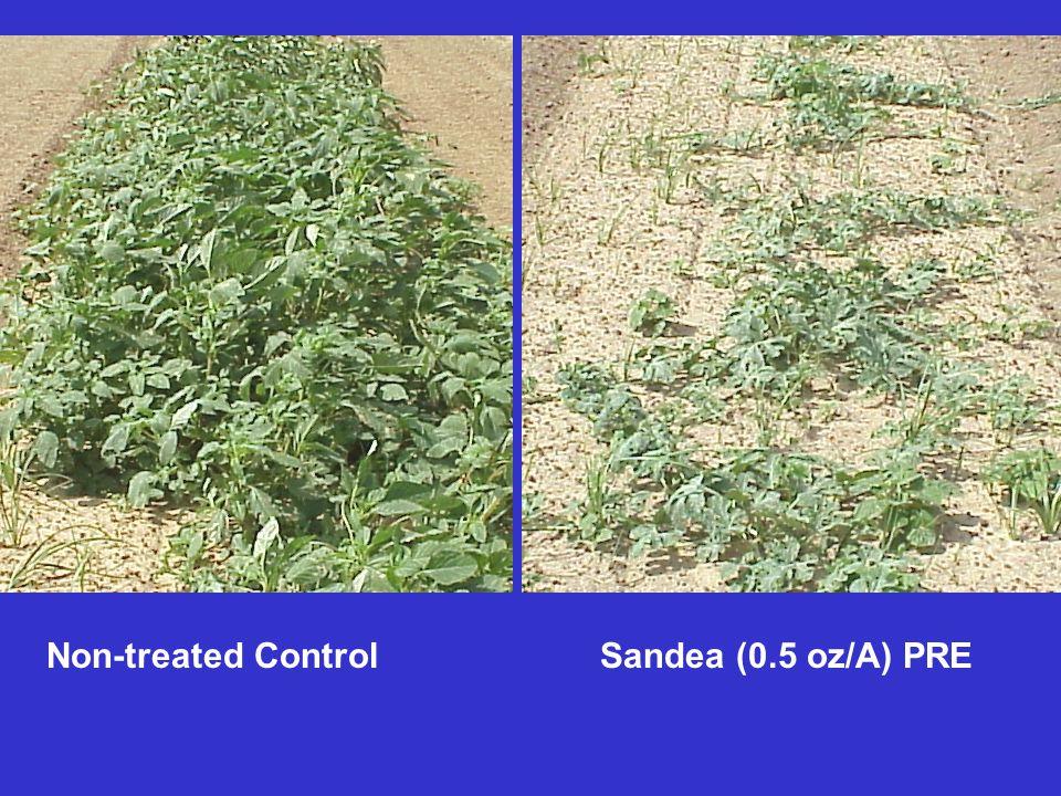Non-treated Control Sandea (0.5 oz/A) PRE