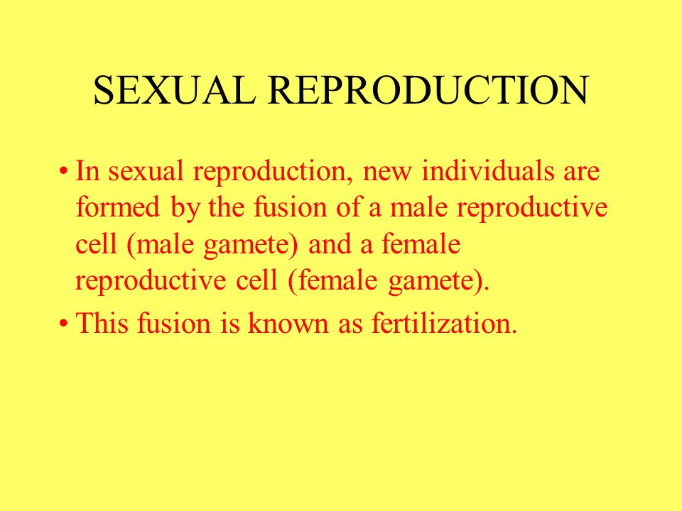 In sexual reproduction, new individuals are formed by the fusion of a male reproductive cell (male gamete) and a female reproductive cell (female game