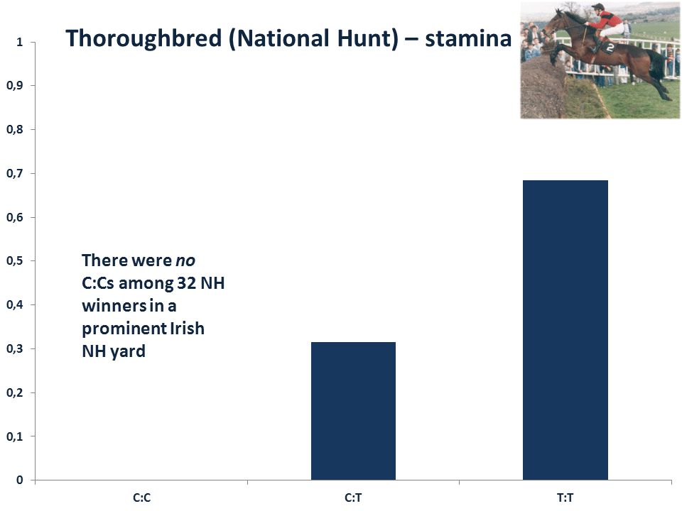 There were no C:Cs among 32 NH winners in a prominent Irish NH yard Thoroughbred (National Hunt) – stamina