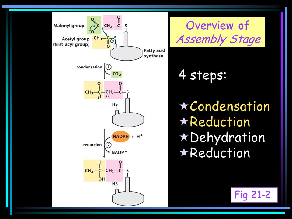 Fig 21-2 4 steps:  Condensation  Reduction  Dehydration  Reduction Overview of Assembly Stage