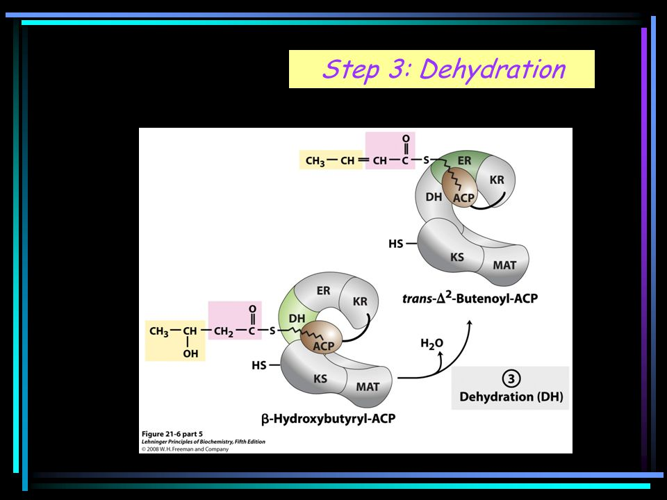 Step 3: Dehydration