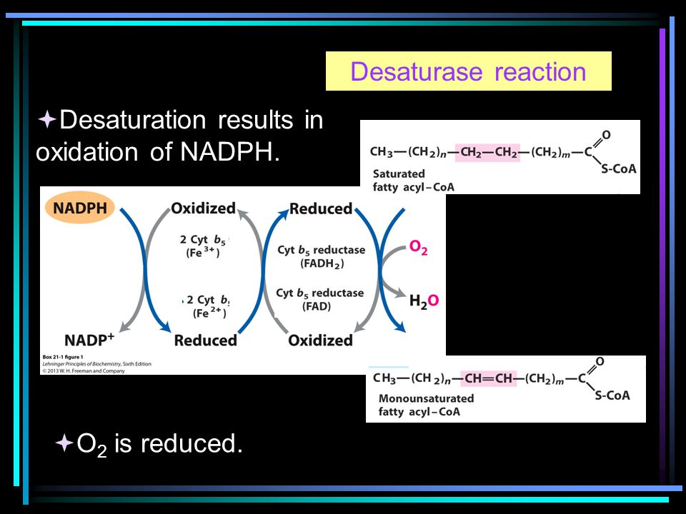 Desaturase reaction  Desaturation results in oxidation of NADPH.  O 2 is reduced.
