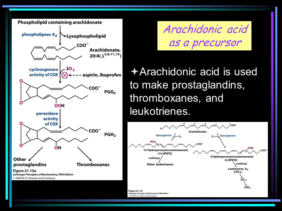 Arachidonic acid as a precursor  Arachidonic acid is used to make prostaglandins, thromboxanes, and leukotrienes.