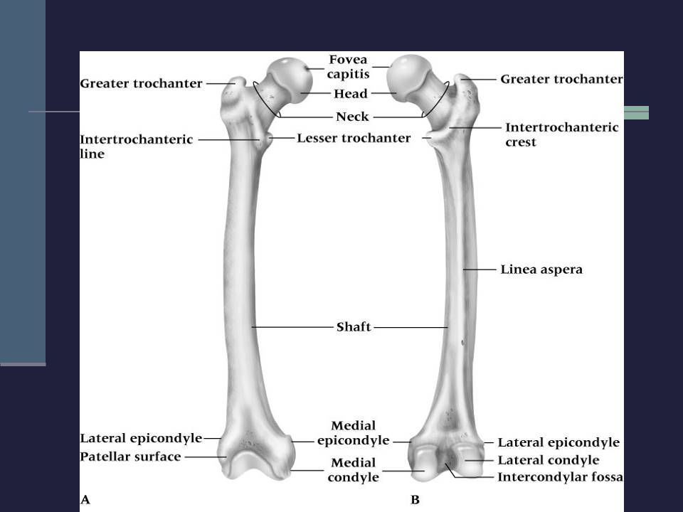 Sprains of the Hip Joint (continued) Management RICE NSAID's and analgesics Depending on severity, crutches may be required ROM and PRE are delayed until hip is pain-free X-rays or MRI should be performed to rule out a possible fracture Hip and Groin Injuries