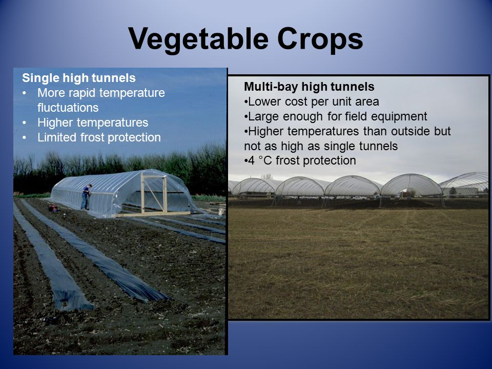 Vegetable Crops Single high tunnels More rapid temperature fluctuations Higher temperatures Limited frost protection Multi-bay high tunnels Lower cost per unit area Large enough for field equipment Higher temperatures than outside but not as high as single tunnels 4 °C frost protection