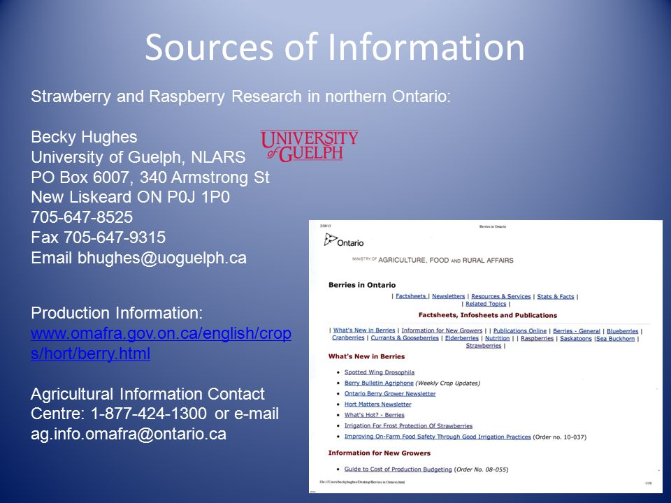 Sources of Information Strawberry and Raspberry Research in northern Ontario: Becky Hughes University of Guelph, NLARS PO Box 6007, 340 Armstrong St New Liskeard ON P0J 1P0 705-647-8525 Fax 705-647-9315 Email bhughes@uoguelph.ca Production Information: www.omafra.gov.on.ca/english/crop s/hort/berry.html Agricultural Information Contact Centre: 1-877-424-1300 or e-mail ag.info.omafra@ontario.ca