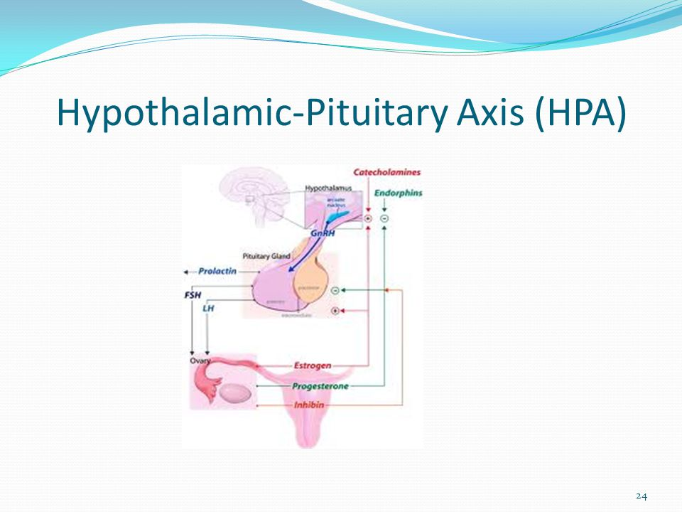 Hypothalamic-Pituitary Axis (HPA) 24
