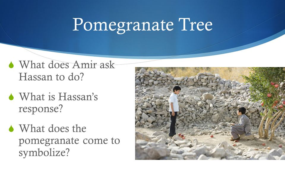 Pomegranate Tree  What does Amir ask Hassan to do.