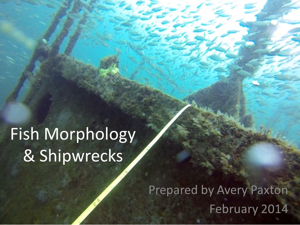 CROSS-SECTIONAL BODY SHAPE Fill out Fish Morphology, Part 1