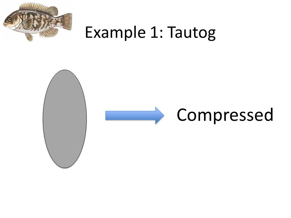 Example 1: Tautog Compressed