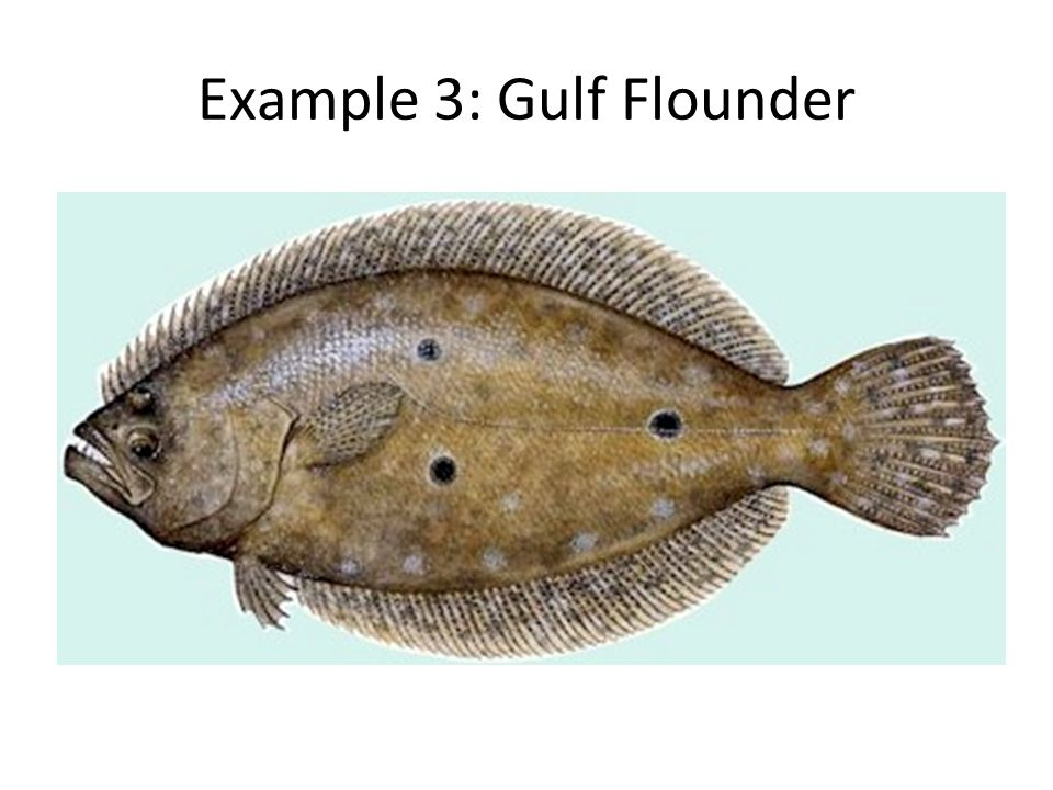 Example 3: Gulf Flounder