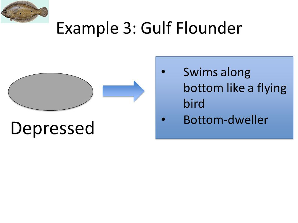 Depressed Swims along bottom like a flying bird Bottom-dweller Example 3: Gulf Flounder