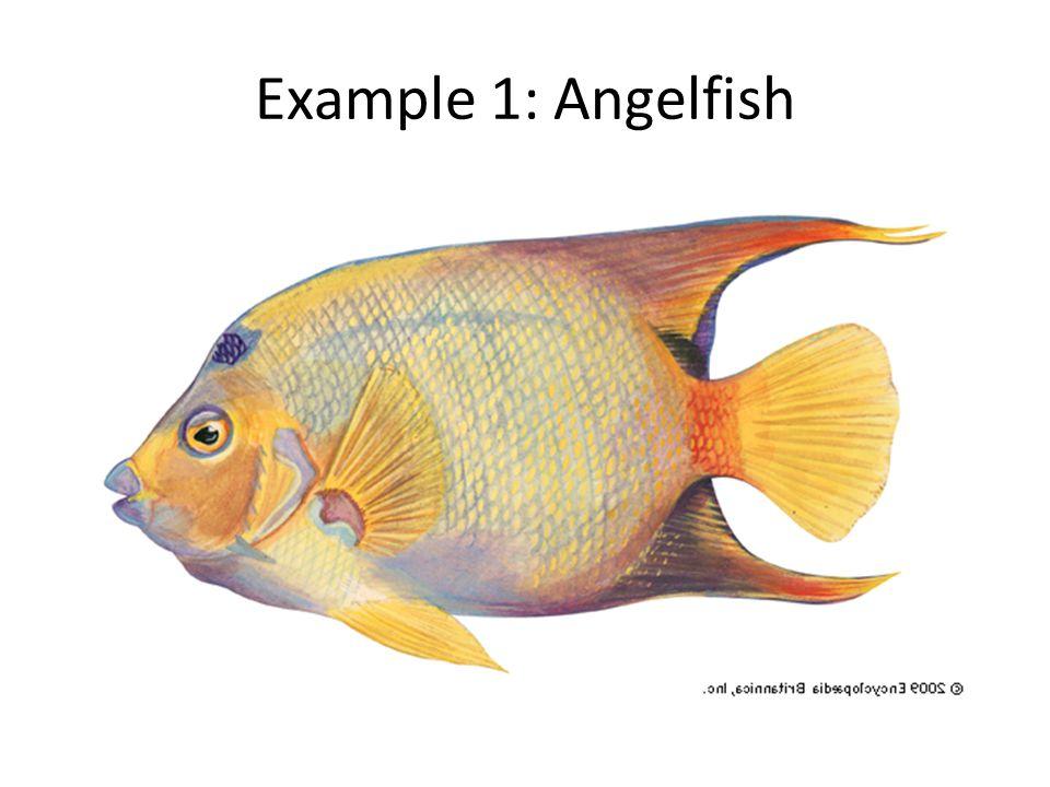 Example 1: Angelfish