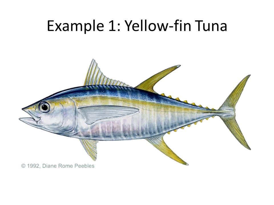 Example 1: Yellow-fin Tuna
