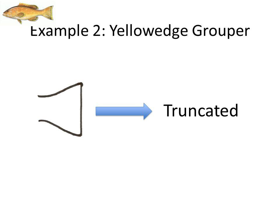Truncated Example 2: Yellowedge Grouper