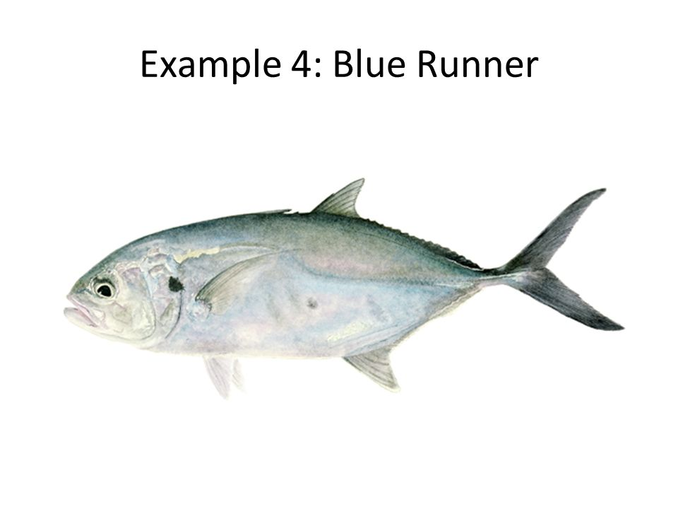 Example 4: Blue Runner