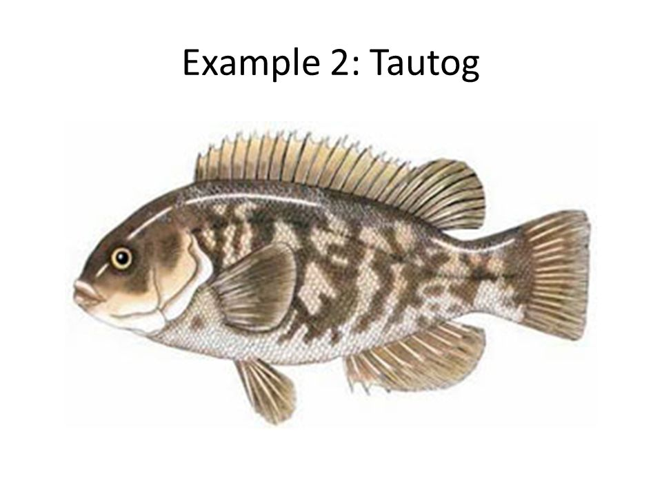 Example 2: Tautog