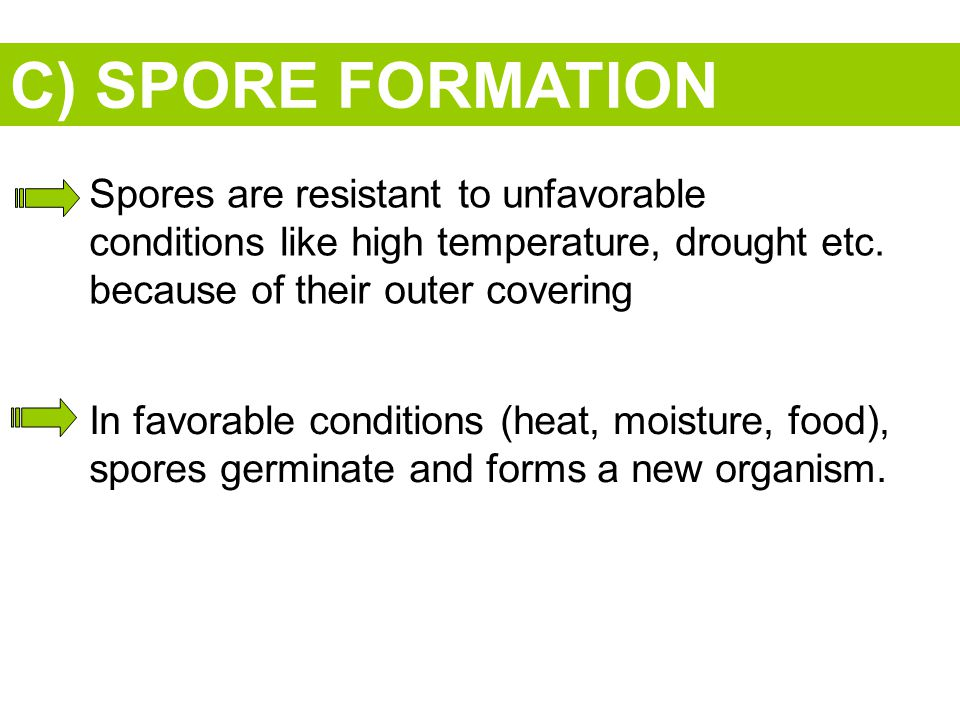 C) SPORE FORMATION Spores are resistant to unfavorable conditions like high temperature, drought etc.