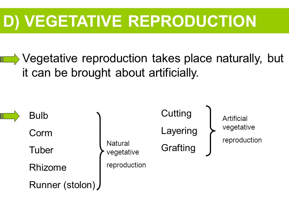 D) VEGETATIVE REPRODUCTION Vegetative reproduction takes place naturally, but it can be brought about artificially.