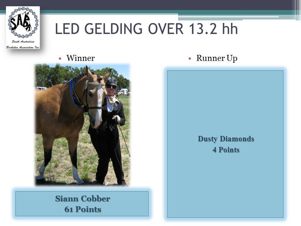 LED GELDING OVER 13.2 hh Runner Up Dusty Diamonds 4 Points Winner Siann Cobber 61 Points