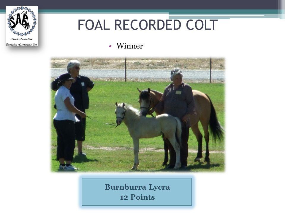 FOAL RECORDED COLT Winner