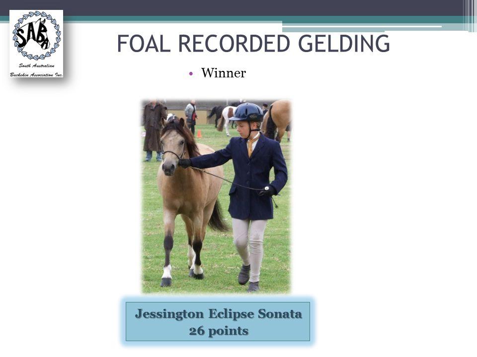 FOAL RECORDED GELDING Winner