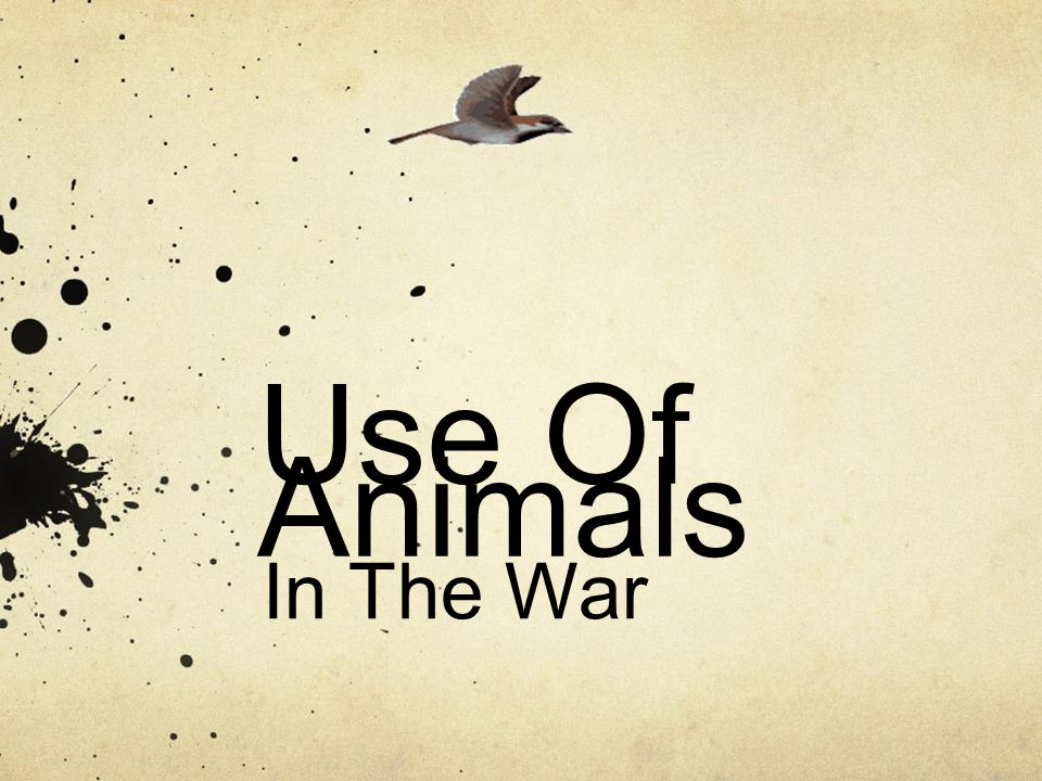 Use Of Animals In The War