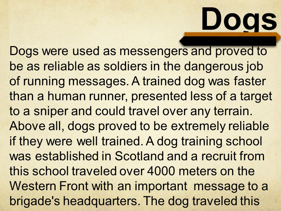 Dogs Dogs were used as messengers and proved to be as reliable as soldiers in the dangerous job of running messages.