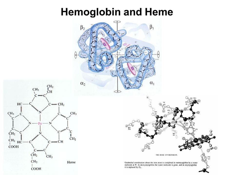 Hemoglobin and Heme
