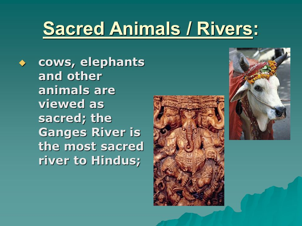 Sacred Animals / Rivers:  cows, elephants and other animals are viewed as sacred; the Ganges River is the most sacred river to Hindus;