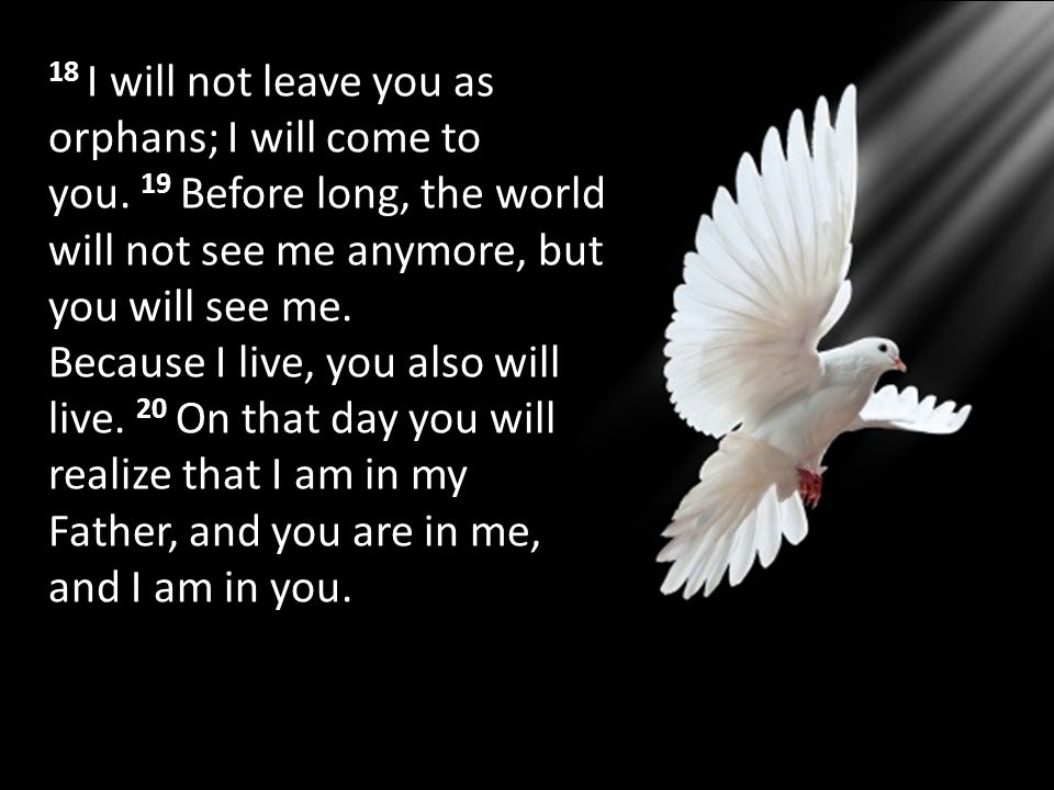 18 I will not leave you as orphans; I will come to you. 19 Before long, the world will not see me anymore, but you will see me. Because I live, you al